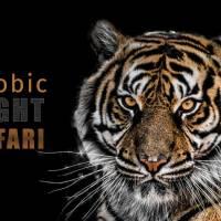 Zoobic Night Safari 2019