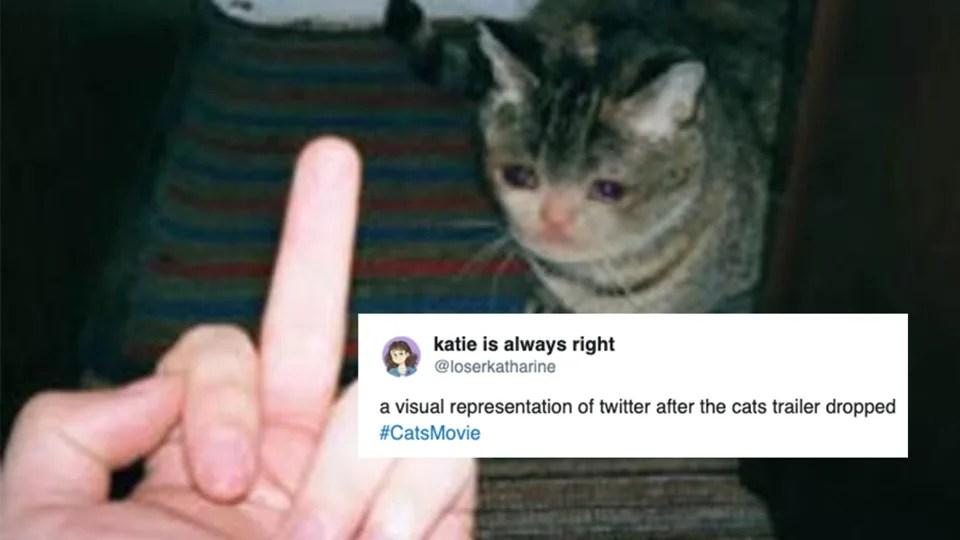 My Custom Cats Movie 2019 By Teamlpsandacnl Meme Center