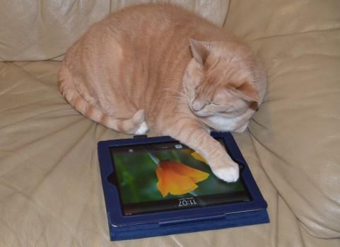 自宅でゴロゴロ猫画像