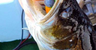 Få en kæmpe fordel i sandart-fiskeriet!