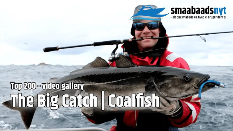 top200-coalfish