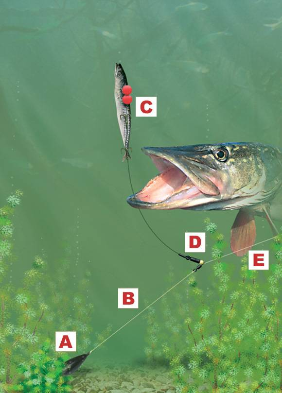 Pike-deadbait-leger-rig.jpg
