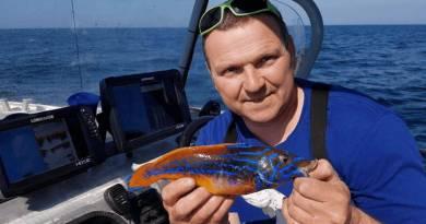Lystfisker indleverer sjælden flot Kattegatfisk