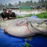 Monstermalle på 248 cm og 132,7 kg!