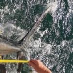 DTUs status på tunmærkningsprojektet