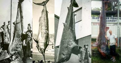 De største fangster gennem tiden – Hvidhaj fanget på marsvin…