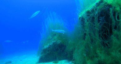 Mange flere torsk efter etablering af stenrev