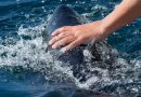 Norske og svenske lystfiskere er klar til at fange blåfinnet tun i Skagerak
