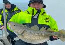 Flot torsk på 13 kg. fra Langelandsbæltet
