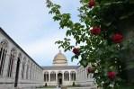 Kwitnący krzak czerwonej róży. W oddali Cmentarz Camposanto.