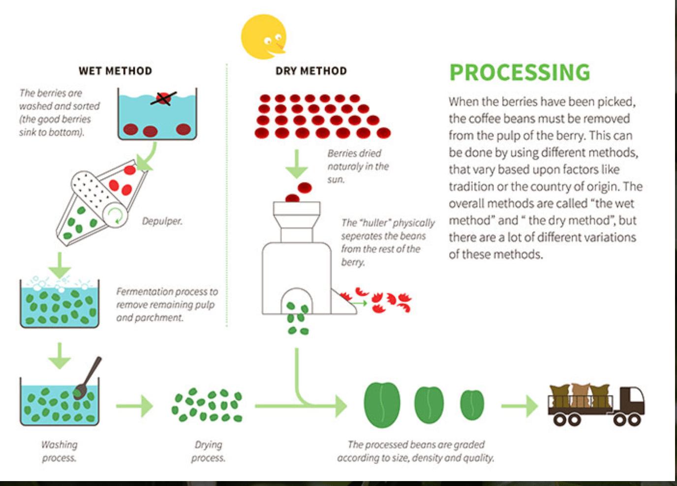 Fermentering Fra Kontarcoffee