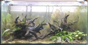 流木レイアウト凹型水草植栽