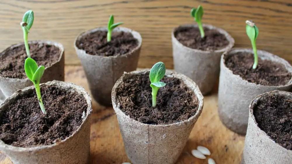 Best 20 Indoor Office Plants Small Business Trends