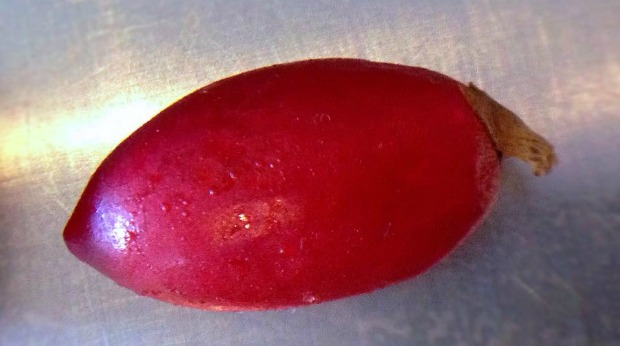 miracle-fruit