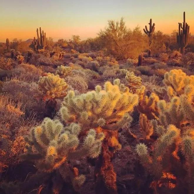 09 Andrew-P.-Phoenix-AZ-728x728