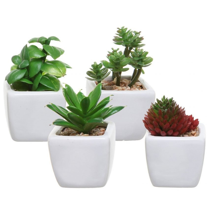 Unique Succulent Pots