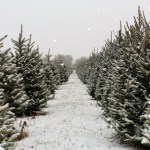 Amazon Set to Sell Live Christmas Trees Benefiting Local Growers