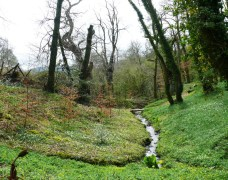 Native Woodland and Stream