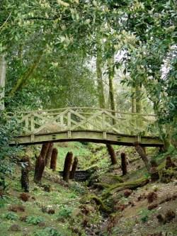 Tree Ferns below the bridge