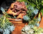 Succulents (2)