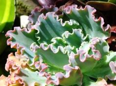 S = Succulents (2)
