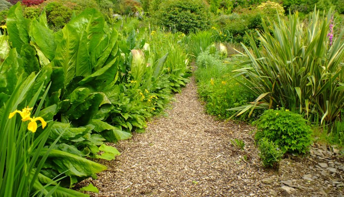 The Link with cabbage skunk and hostas