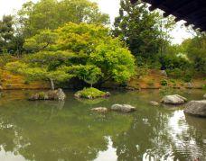 The Scroll Garden