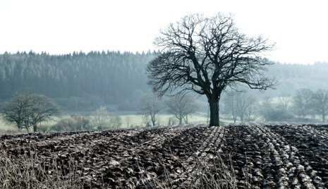 ...and the ploughed earth. Such textures to be found in nature.