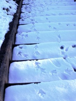 Duck tracks on the steps