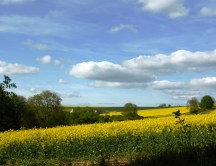 on the wolds