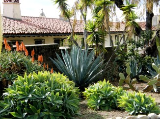 Typical Drought-tolerant planting