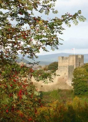 Castle framed by berries