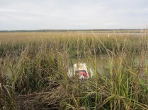 dnghy beached in marsh