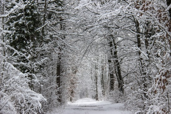 Photo of winter forest by Pixabay photographer Waldkunst