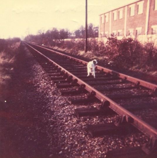Near Butterwick Siding looking West 1965