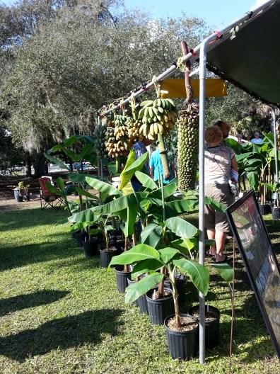 Going Bananas Vendor Area, pic 2, Gardenfest 2014