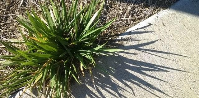 Grass and Sidewalk with Shadow Ashland OR