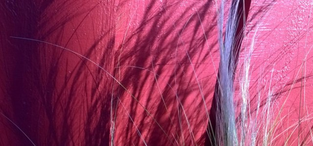 Grass Shadows Against Red Wall Caffe Mezza Luna