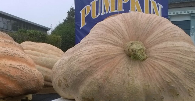Great Pumpkin Contest Half Moon Bay CA