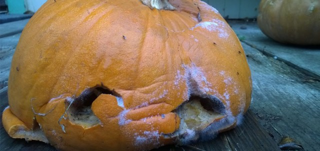 Post Halloween Jackolantern