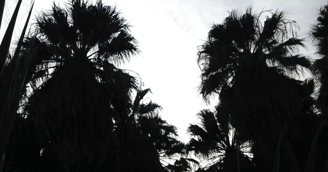 Palms Silhouette Anza Borrego CA