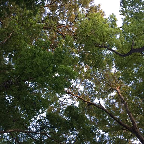 treeroof