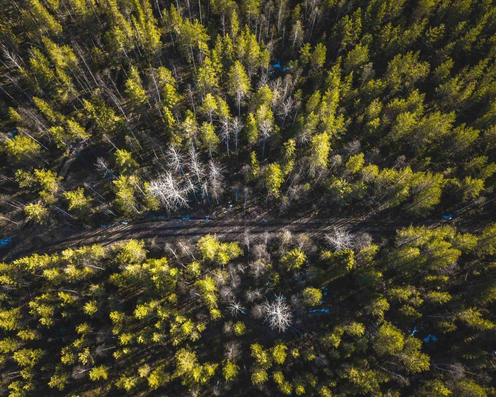 Lapponia taiga distesa di alberi fotografata con drone