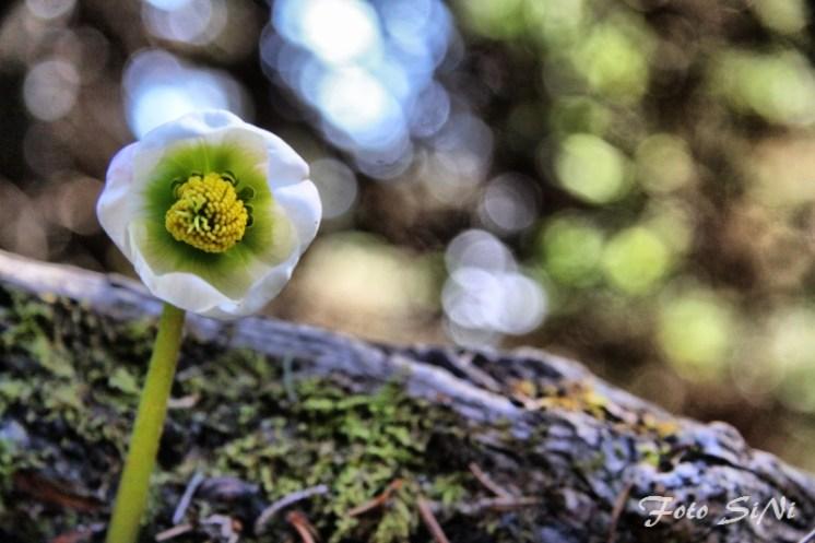 2017-04-01-UrsljaGora_fotoSiNi_045_fhdr