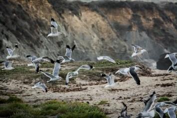 Pandemonium by pelican