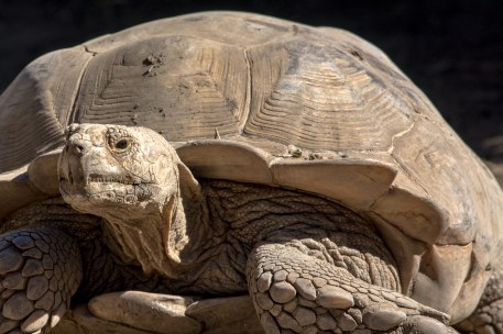 thoughtful tortoise