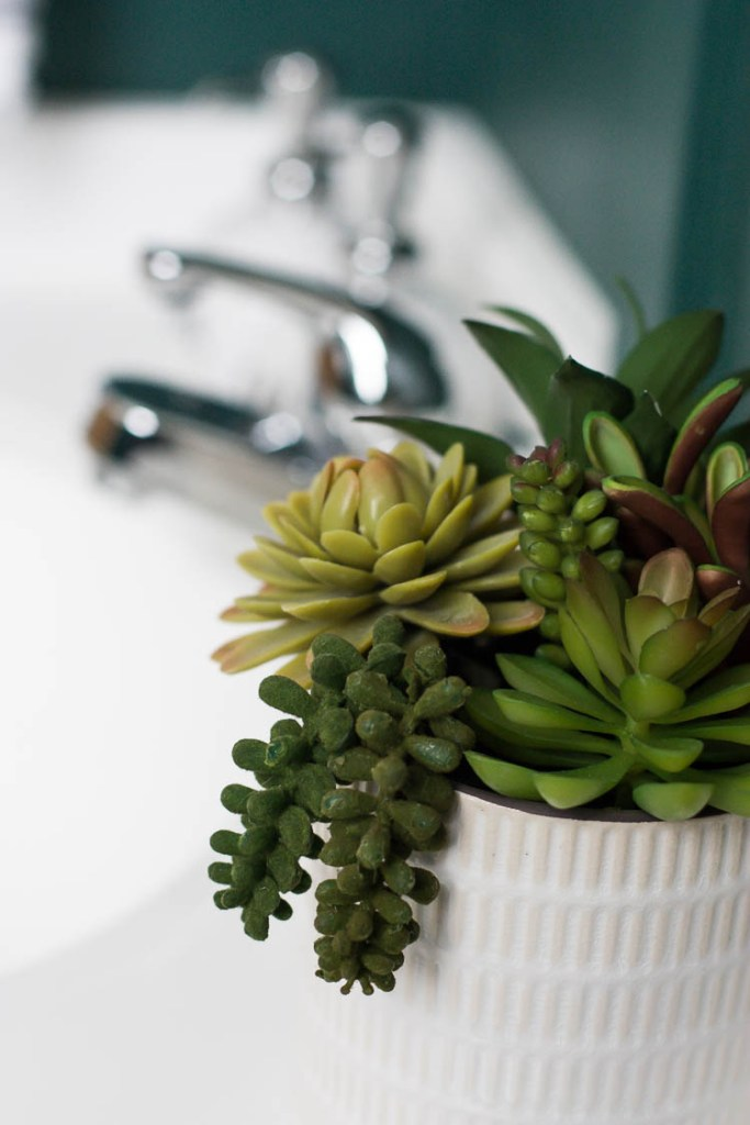 succulent-in-bathroom