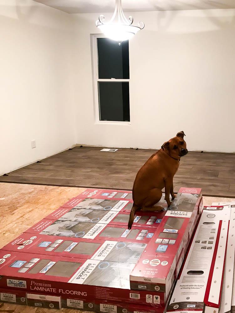dog-sitting-on-stack-of-laminate-flooring-boxes