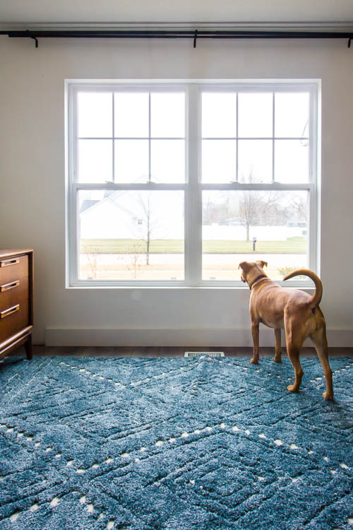 dog-looking-out-window-with-blue-rug-white-walls