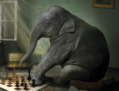 Le petit joueur d'échecs – Yoko Ogawa